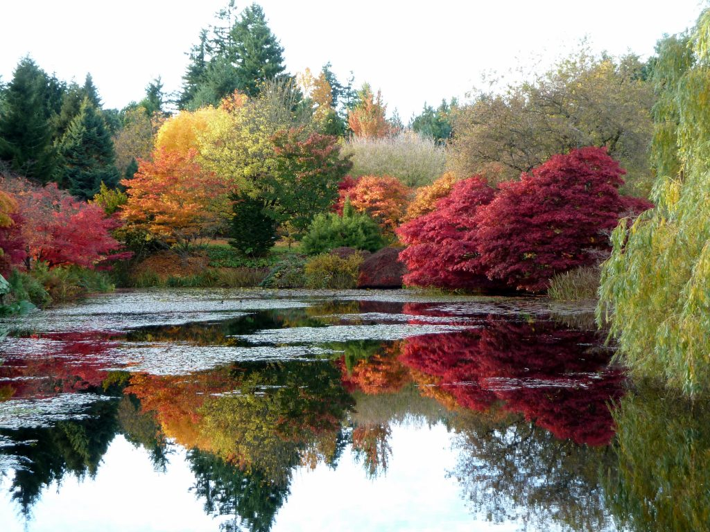 By Wendy Cutler from Vancouver, Canada - 20111104_VanDusen_Cutler_P1170229Uploaded by PDTillman, CC BY 2.0, https://commons.wikimedia.org/w/index.php?curid=17415135